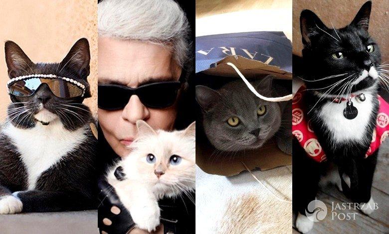 Najbardziej stylowe koty na Instagramie