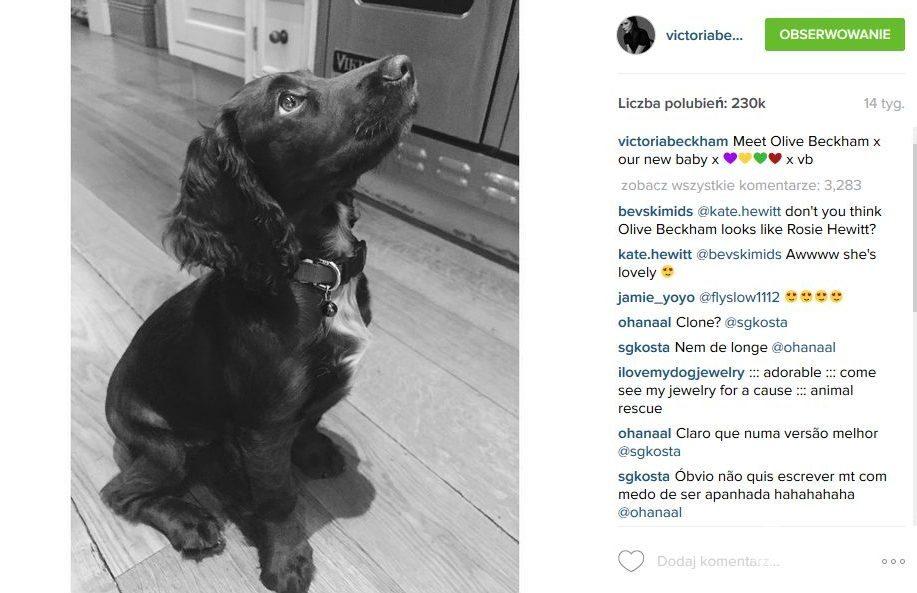 Olive pies Beckhamów ma konto na Instagramie (fot. Instagram)