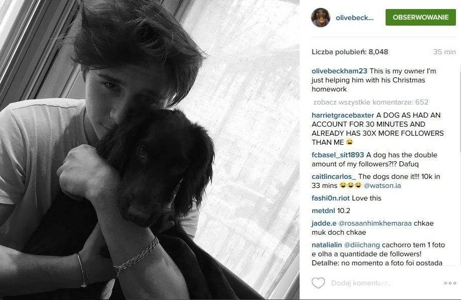 Brooklyn Beckham i Olive pies Beckhamów na Instagramie (fot. Instagram)