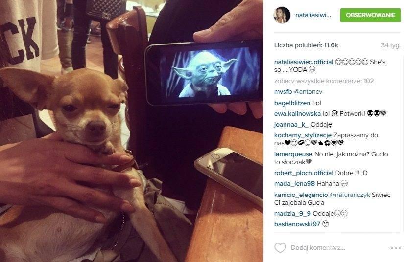 Gucio - pies Natalii Siwiec