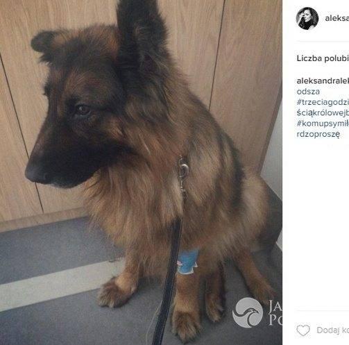 Pies Oli Kwaśniewskiej zachorował