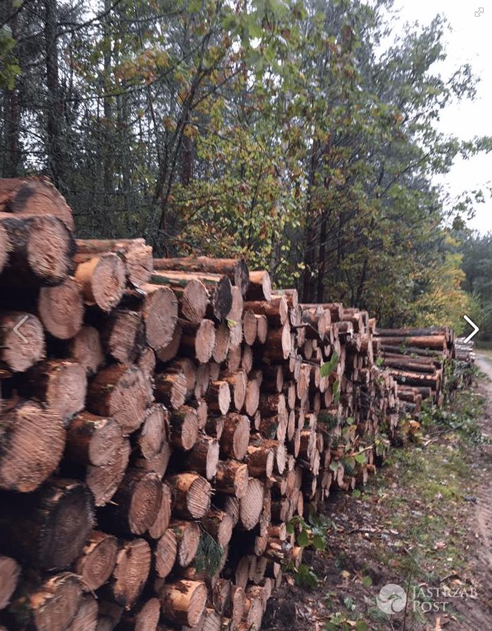 Kinga Rusin broni lasów - Facebook