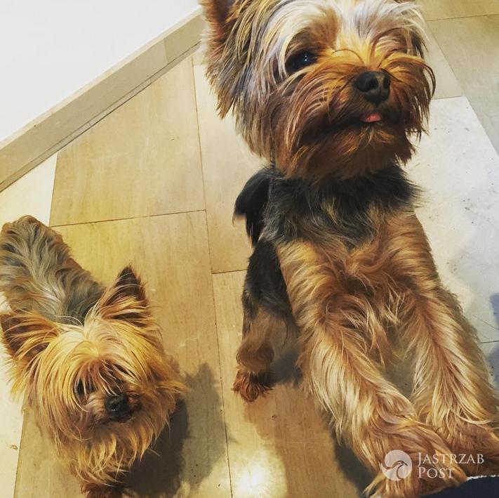 Taylor i Bugsy pieski Weroniki Rosati - Instagram