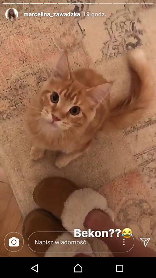 Marcelina Zawadzka dostała kota
