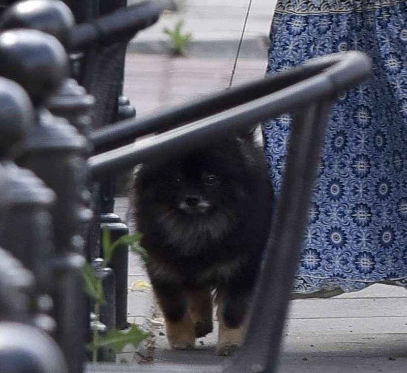 Kinga Rusin z psem na spacerze