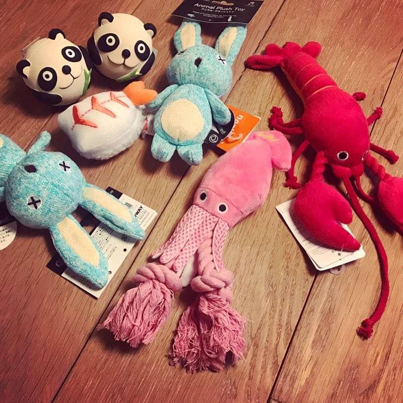 Ola Kwaśniewska przywiozła zabawki dla psów z Japonii