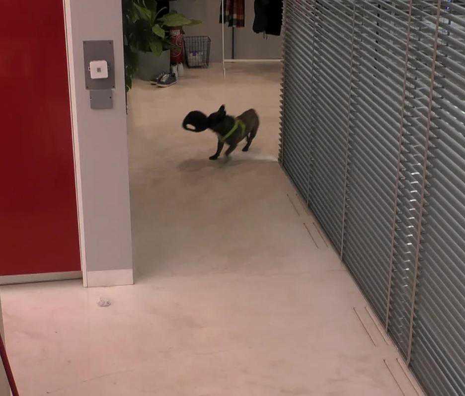 Pies Igora w Big Brotherze