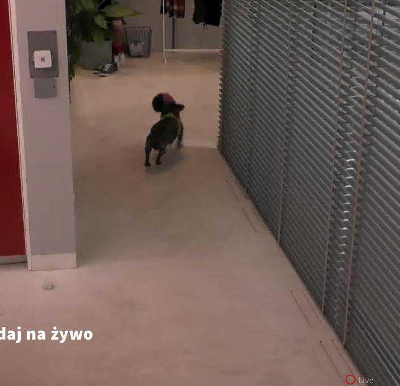 Pies Igora został przywieziony do Big Brothera na pięć minut