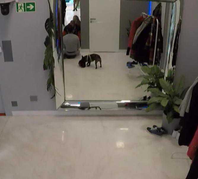 Pies Igora Jakubowskiego miał przeszkodzić uczestnikom w wykonywaniu zadania
