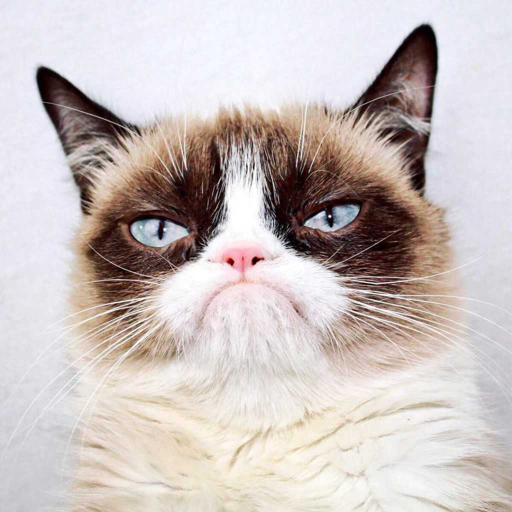 Grumpy Cat - Instagram