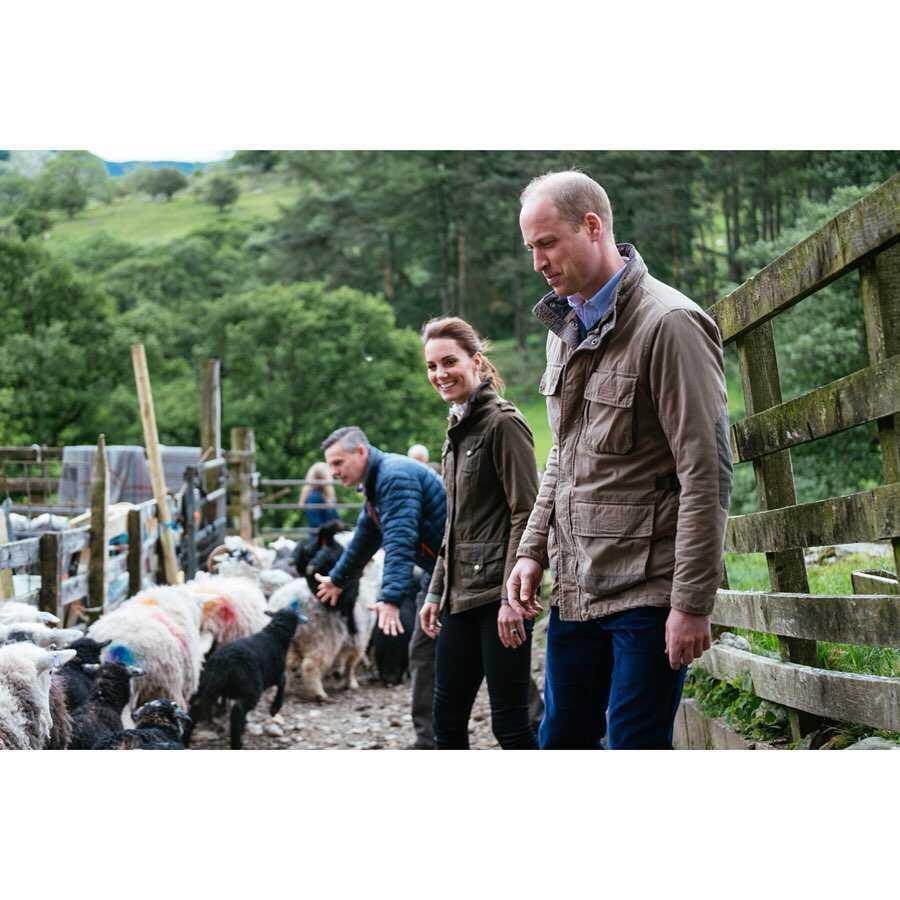 Książę William i księżna Kate - farma owiec
