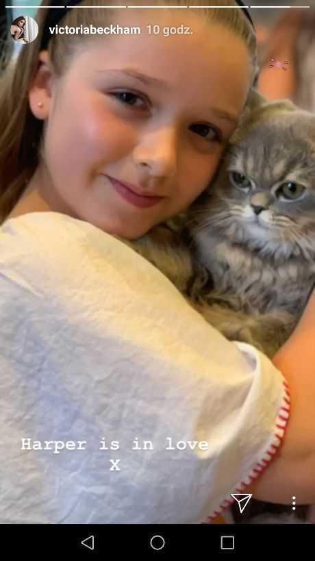 Harper Beckham pozuje z perskim kotem na Instagramie mamy