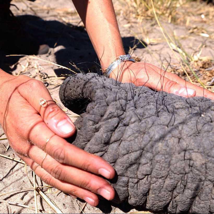 Meghan Markle opiekuje się słoniem