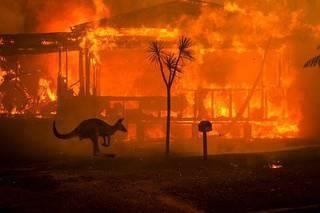 Zdjęcie (1) Cały świat podaje dalej! Trwa zbiórka pieniędzy dla Australii. Ogromne wpłaty od gwiazd