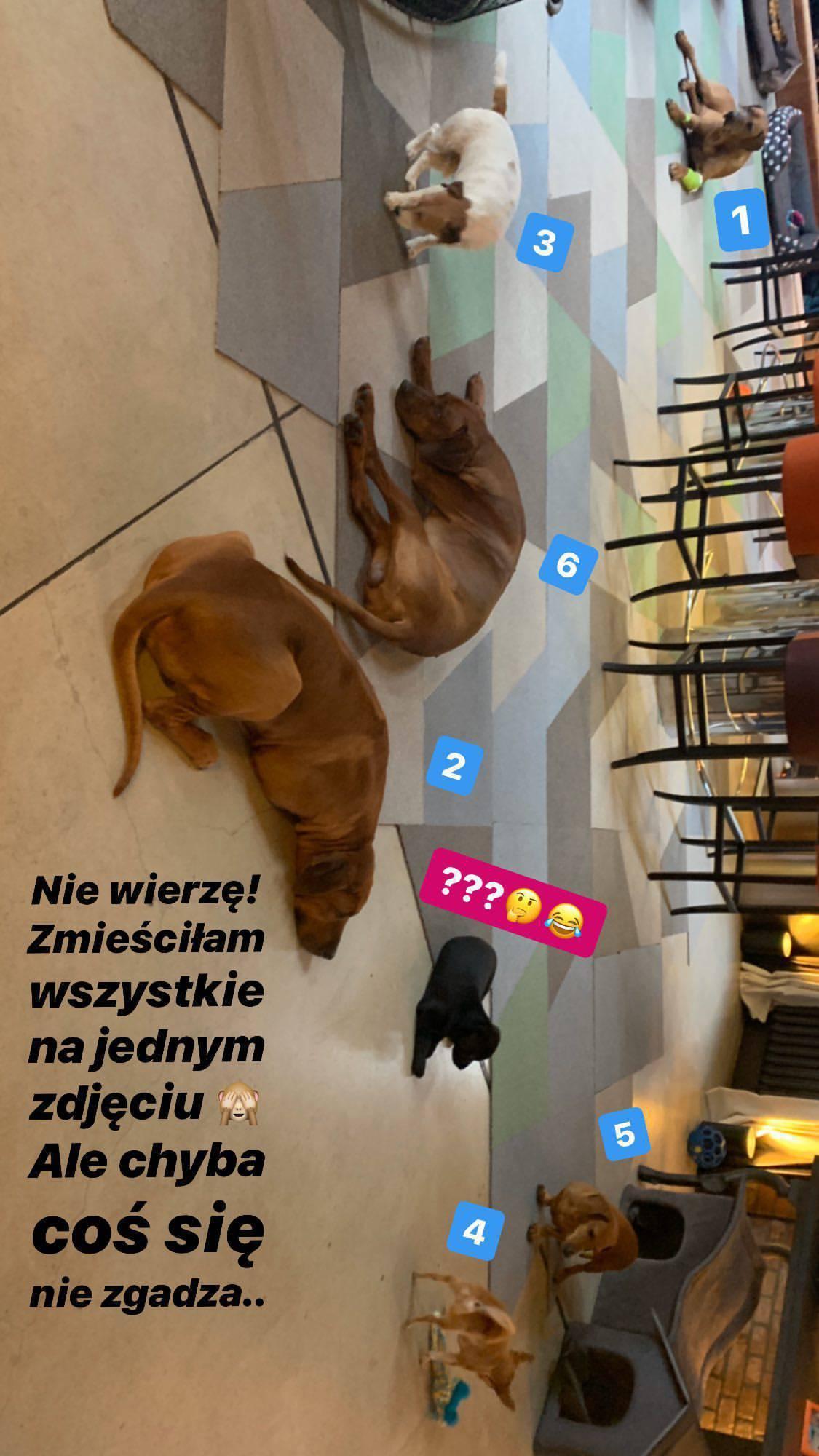 Agnieszka Woźniak-Starak - 7. pies