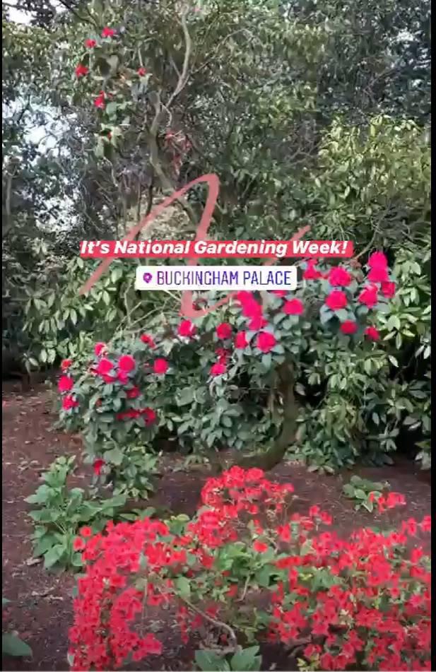 Kwiaty w ogrodzie królewskim