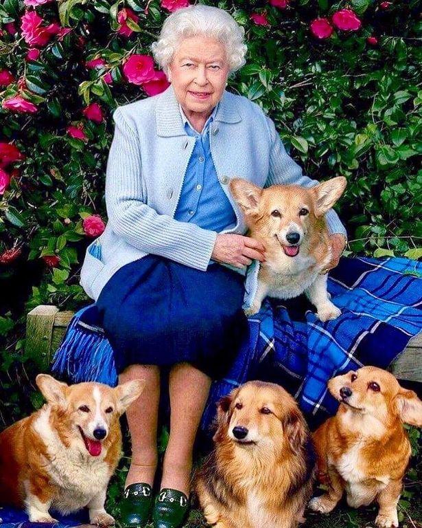 Królowa Elżbieta II z psami