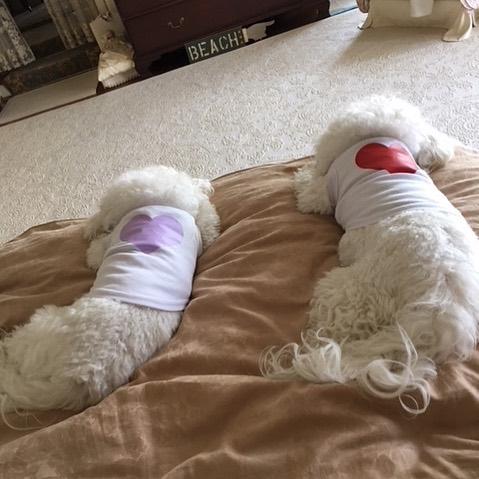 Psy kością niezgody w małżeństwie Barbry Streisand